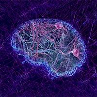 No hay neurogénesis en adultos - Cierta Ciencia podcast - CienciaEs.com