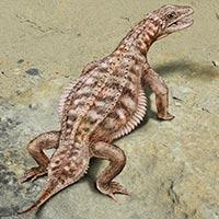 Eusaurosphargis - Zoo de Fósiles podcast - CienciaEs.com