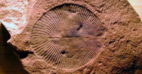 Dickinsonia - Zoo de Fósiles podcst - CienciaEs.com