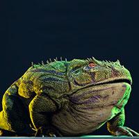 Beelzebufo - Zoo de fósiles podcast - CienciaEs.com