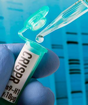 CRISPR contra bacterias - Quilo de Ciencia podcast - CienciaEs.com