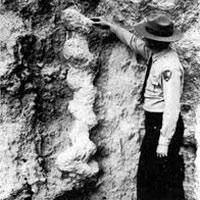 Sacacorchos del diablo - Zoo de fósiles podcast - CienciaEs.com