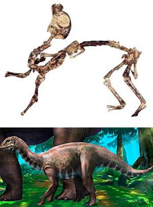 Mussaurus - Zoo de fósiles podcast - CienciaEs.com
