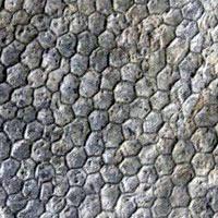 Paleodictyon, el misterio de las profundidades. Zood de Fosiles podcast - Cienciaes.com