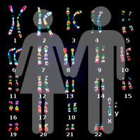Genes machos y hembras - Quilo de Ciencia podcast - CienciaEs.com
