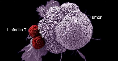 Inmunoterapia - Quilo de Ciencia podcast - CienciaEs.com