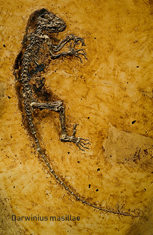 Yacimiento de Messel - Zoo de fósiles podcast - CienciaEs.com