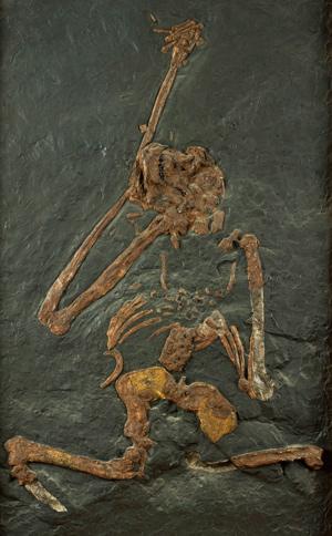 Evolución humana - Hablando con Científicos podcast - CienciaEs.com