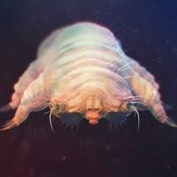 Arácnidos microscópicos en tu pelo - Quilo de Ciencia podcast - Cienciaes.com