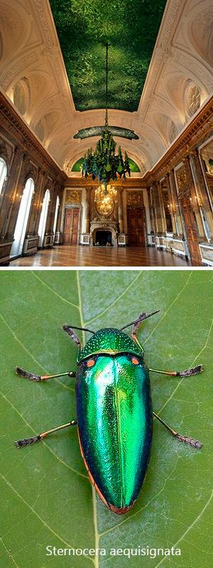 Camuflaje iridiscente - Quilo de Ciencia podcast - CienciaEs.com