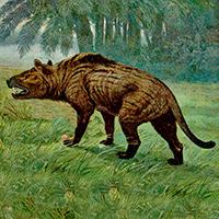 Los creodontos - Zoo de Fósiles - CienciaEs.com
