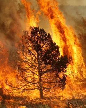 Incendios forestales- Hablando con Científicos podcast - CienciaEs.com