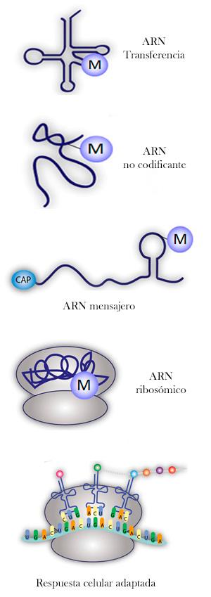 ARN y sinfonía de la vida - Hablando con Científicos  Cienciaes.com