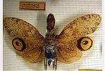 Machaca - Seis patas tiene la vida - cienciaes.com