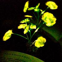 Sol tranquilo y bioluminiscencia - Ciencia Fresca Podcast  - CienciaEs.com