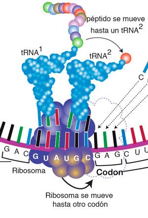 Código genético y coronavirus - Hablando con Científicos podcast - CienciaEs.com