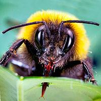 El mordisco del abejorro - Quilo de Ciencia podcast - CienciaEs.com