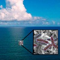 Guerra latente en el océano - Quilo de Ciencia podcast - Cienciaes.com
