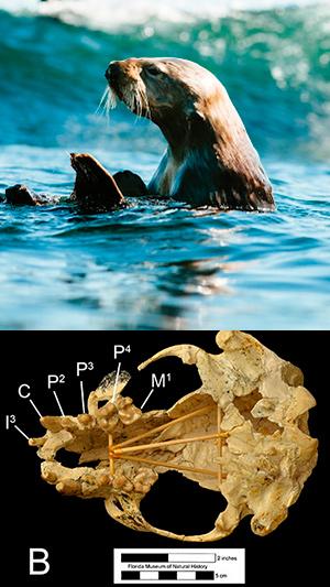 Nutrias gigantes - Zoo de fósiles podcast - CienciaEs.com