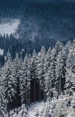 Futuro de los bosques - Hablando con Científicos podcast - CienciaEs.com