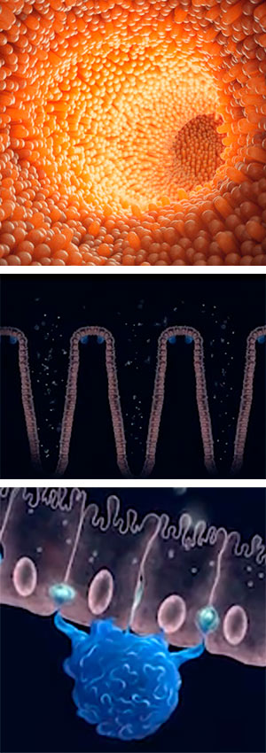 Células que mantienen sana la piel más sucia - Quilo de Ciencia podcast - CienciaEs.com