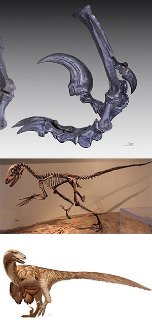 Deinonychus - Zoo de Fósiles podcast - CienciaEs.com