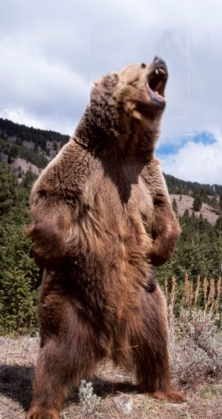 El oso chato - Zoo de fósiles podcast - CienciaEs.com