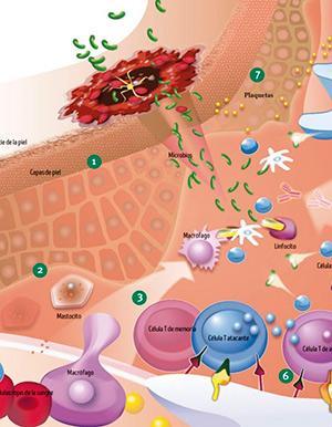 Sistema inmunitario 1 - Hablando con Científicos podcast - CienciaEs.com