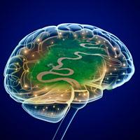 Plasticidad cerebral - Cierta Ciencia podcast - CienciaEs.com