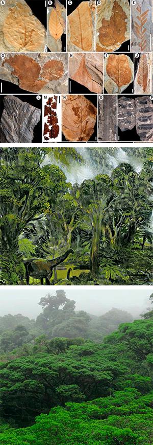 Origen de las selvas tropicales - Hablando con Científicos podcast - CienciaEs.com