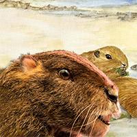 Gondwanaterio - Zoo de Fósiles podcast - CienciaEs.com