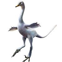 Halszkaraptor, el dinosaurio cisne. Zoo de Fósiles podcast - CienciaEs.com