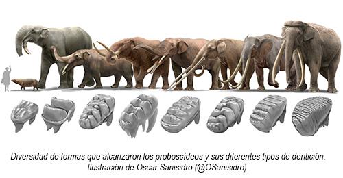 La senda evolutiva de los elefantes - Hablando con Científicos podcast - Cienciaes.com