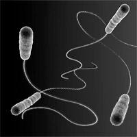 Cruella Legionella