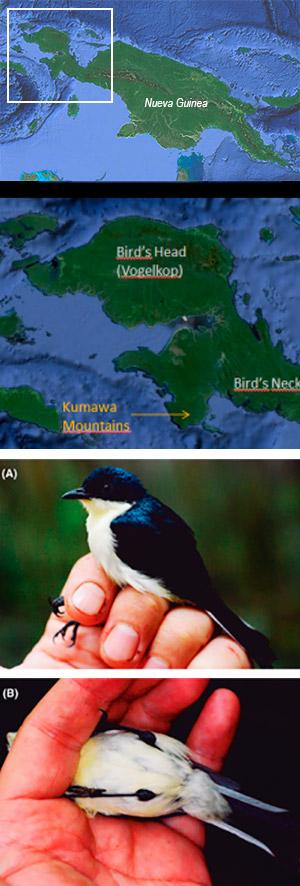 Nueva especie de ave - Hablando con Científicos podcast - CienciaEs.com