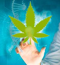 Marihuana y Salud. Quilo de Ciencia podcast - CienciaEs.com