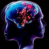 Cerebro de hombre versus mujer - Cierta Ciencia podcast - Cienciaes.com