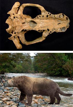 Kolponomos - Zoo de fósiles podcast - Cienciaes.com