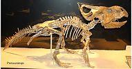 Dinosaurios - Hablando con científicos - cienciaes.com