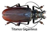 Titanus Giganteus - Seis patas tiene la vida podcast