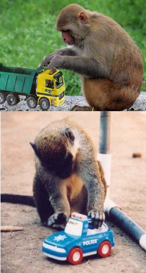 A los monos les gustan los camiones . Quilo de Ciencia podcast
