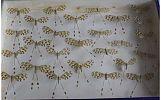 Espositor de Nemopteras bipennis. Hablando con científicos