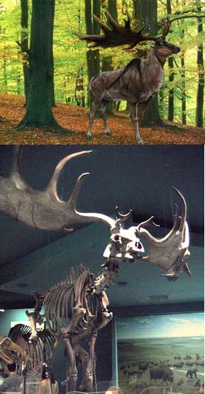 Megacero gigante