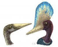 darwinopterus - Zoo de Fósiles - Cienciaes.com