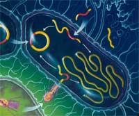 Antigenes bacterianos - Quilo de Ciencia - cienciaes.com
