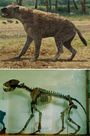 Pachicrocuta - Zoo de fósiles podcast - cienciaes.com