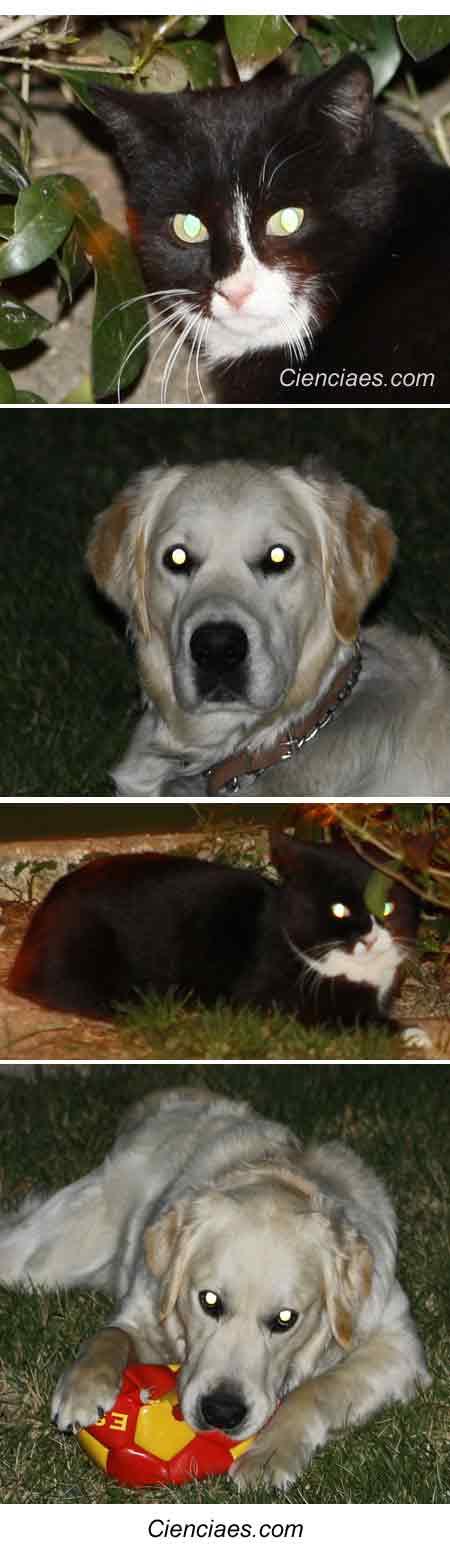 Gato con los ojos brillantes