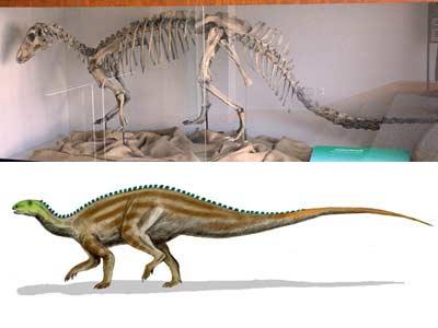 Tenontosaurio