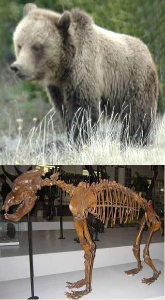 Cienciaes.com: El oso de las cavernas   Podcasts de Ciencia